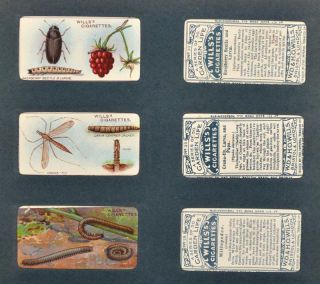 WILLS'S CIGARETTE CARD ALBUM