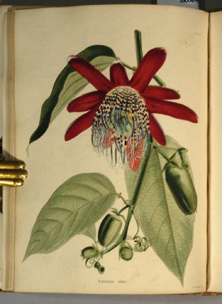 BOTANICAL CABINET, VOL. III