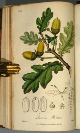MEDICAL BOTANY: OR, ILLUSTRATIONS AND DESCRIPTIONS OF THE MEDICINAL. John STEPHENSON