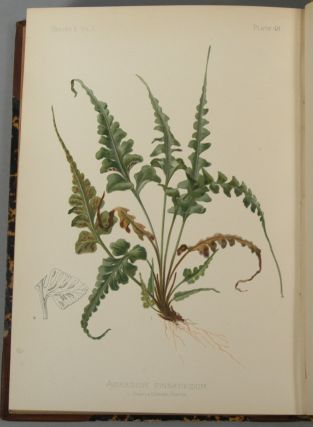 NATIVE FLOWERS AND FERNS OF THE UNITED STATES