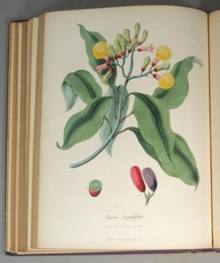CYCLOPAEDIA OF USEFUL & ORNAMENTAL PLANTS Used in the Arts, In Medicin