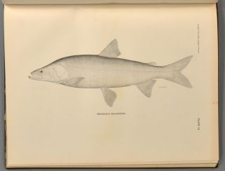 CONTRIBUTIONS TO THE NATURAL HISTORY OF ALASKA.