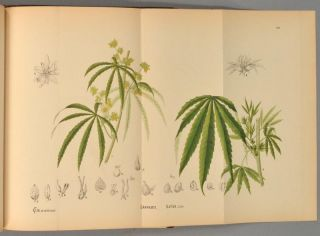 AMERICAN MEDICINAL PLANTS; AN ILLUSTRATED AND DESCRIPTIVE GUIDE