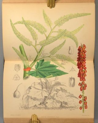MEDICINAL PLANTS BEING DESCRIPTIONS WITH ORIGINAL FIGURES, 3 VOLS.