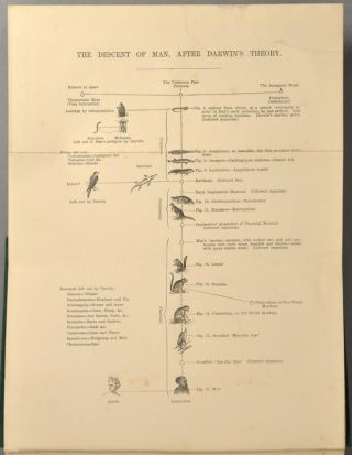 EXPOSITION OF FALLACIES IN THE HYPOTHESIS OF MR. DARWIN.